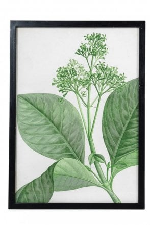 Nature Wall Art Big Leaves Print