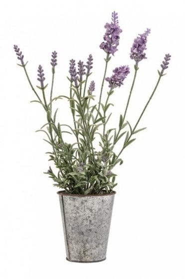 Lavender In Steel Pot