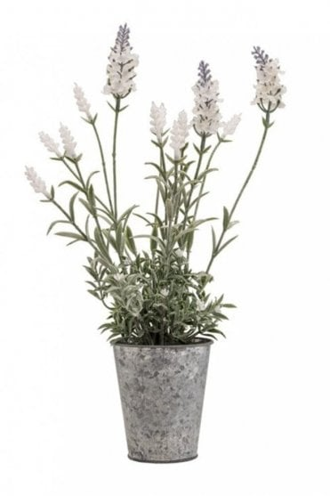White Lavender in Steel Pot