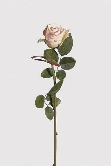 Cream Blush Rose Antique
