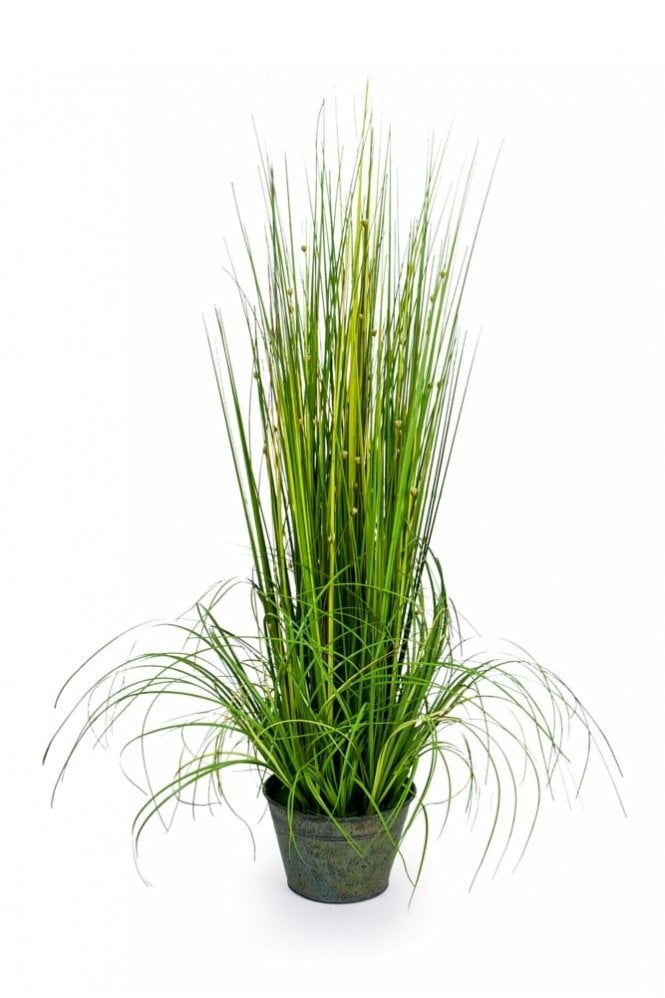 Sue Parkinson Home Collection Ornamental Grasses in Galvanised Pot – Style 2