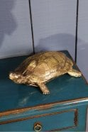 Sue Parkinson Home Collection Small Golden Turtle